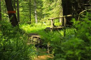 Naturpfad (4)